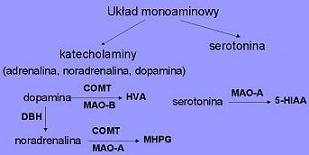monoamine system